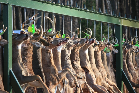 Business was booming at the Jerome Country Market buck pole during opening week of Michigan's firearm deer season. Photo courtesy of Fred Glowe