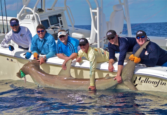 Left to Right: Peter Miller, Captain Randy Towe, Tom Frank, Sam Frank, Mike Frank and Madison the boat mate work get a good look at a 500 pound hammerhead shark before letting it go.Courtesy | Rick Sorensen Photography
