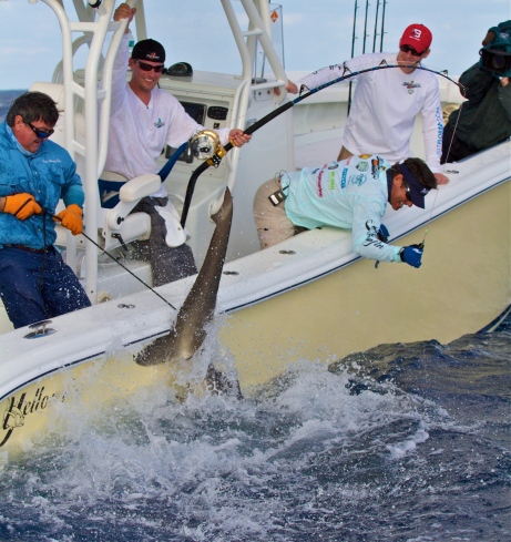 Left to Right: Captain Randy Towe, Sam Frank, Peter Miller and Tom Frank all work to bring in a thrashing Dusky Shark while a cameraman films for the TV show. Photo: Courtesy  Rick Sorensen Photography