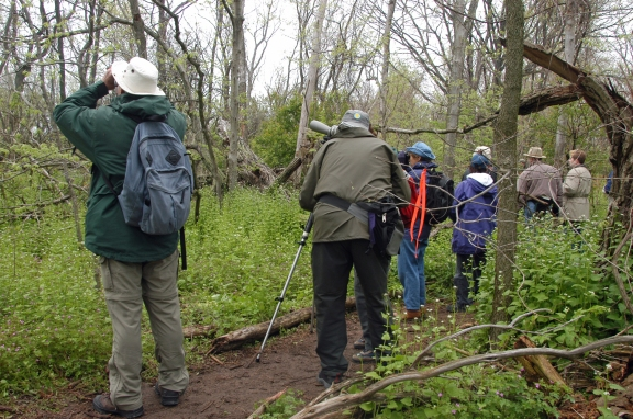 Birdwatchers spread out on the boardwalk at Point Pelee National Park in Leamington Ont. Photo: Howard Meyerson