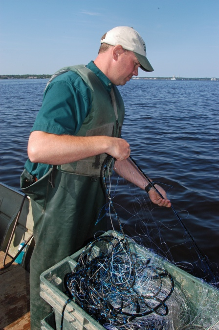 DNR biologist and sturgeon researcher Kregg Smith pulls in a net on Muskegon Lake. Photo: Howard Meyerson