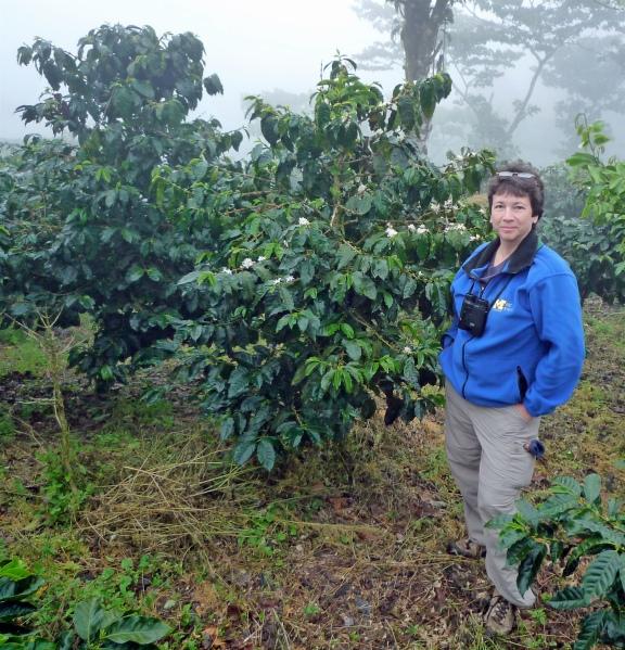 Julie Craves among the coffee plants in Nicaragua at El Jaguar, a farm/bird reserve. Photo: Darrin O'Brien