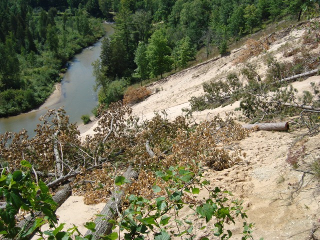 Cut trees have been positioned on this popular Pine River sand slide to reduce erosion and use by people who like to climb it and slide down. Photo: Manistee National Forest