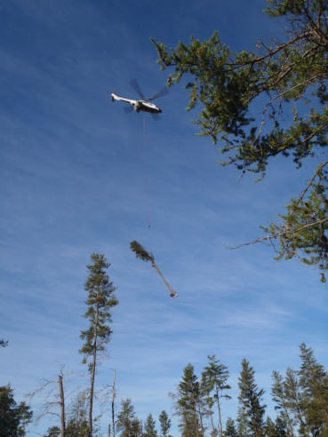 A helicopter was used to move trees from state land to the AuSable River to create fish structure. Photo: Michigan DNR.