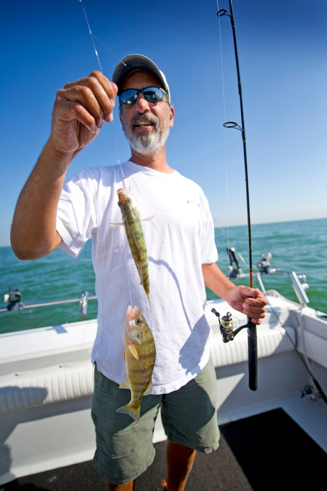 Lake Erie yellow perch fishing is being impacted by the non-native white perch that is eating up young yellow perch laravae. Photo: MDNR