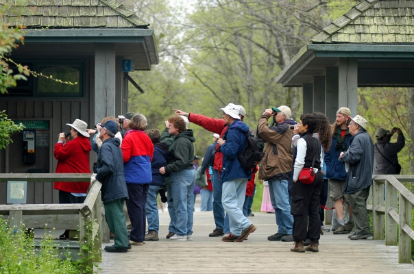 Bird watchers gather to see migratory species each spring at the Festival of Birds held at Point Pelee National Park in Leamington Ontario. Photo: Howard Meyerson
