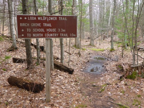 The 1.2 mile trail at Loda Lake connects with the North Country Scenic Trail. Photo:  Howard Meyerson