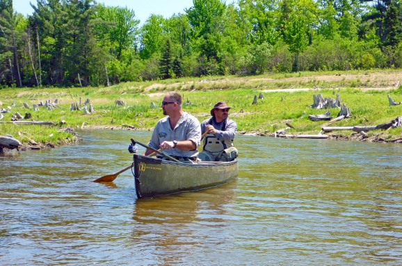Brett Fessell (front) and Frank Dituri explore the Boardman River restoration zone by canoe and see new growth and tree stumps left from 1800's logging efforts prior to building the Brown Bridge Dam. Photo: Howard Meyerson