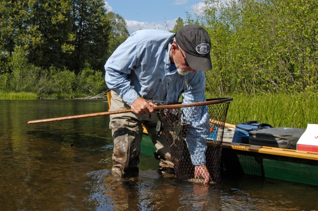 Fishing guide Jeff Andrews, nets a small brook trout on the North Branch of the AuSable River, one of the streams listed in the DNR's new online application for anglers. Photo: Howard Meyerson.