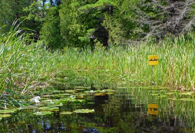 Yellow trail markers point out the route through cattails and ponds. Photo: Howard Meyerson