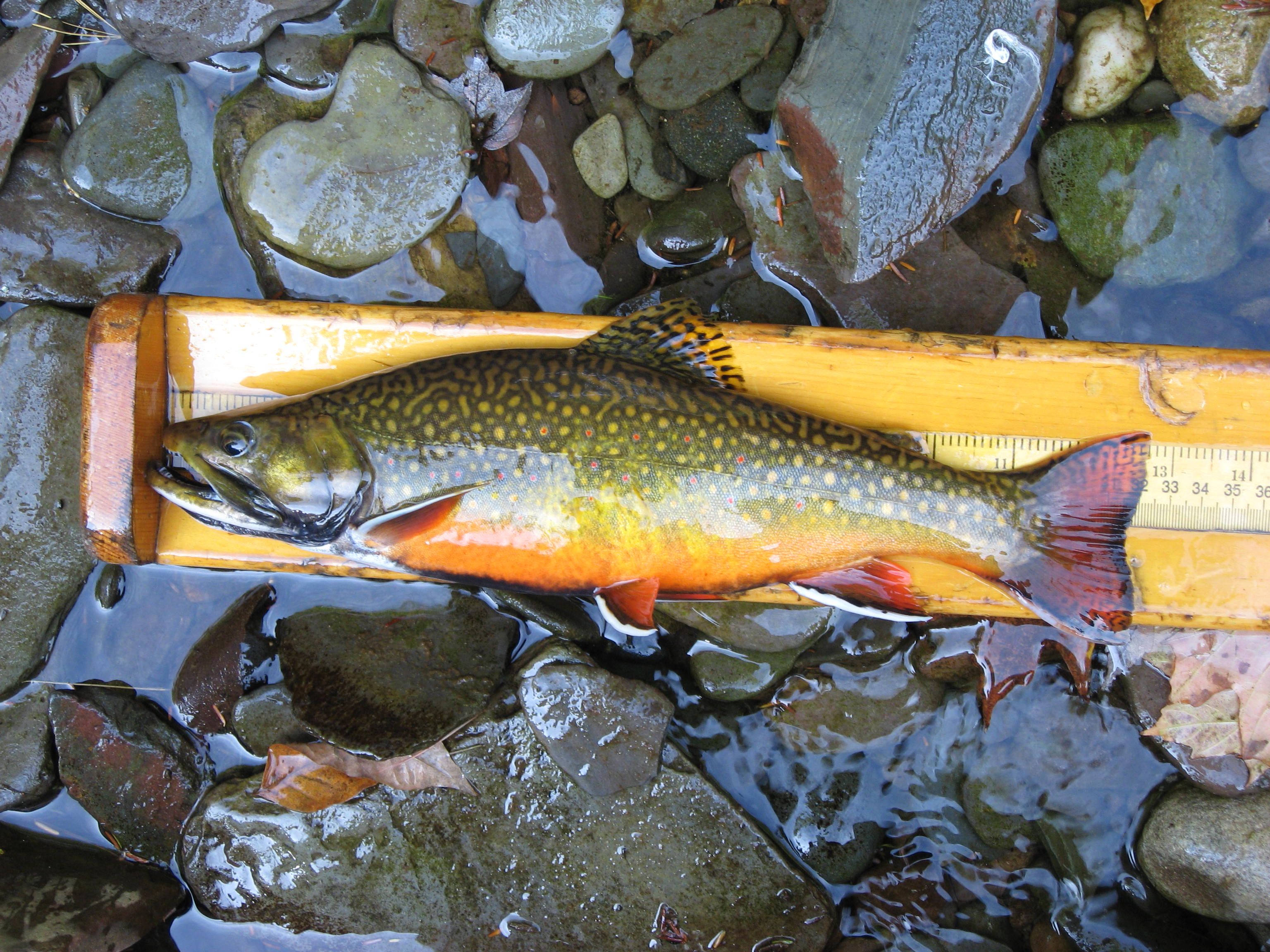 how to catch brook trout