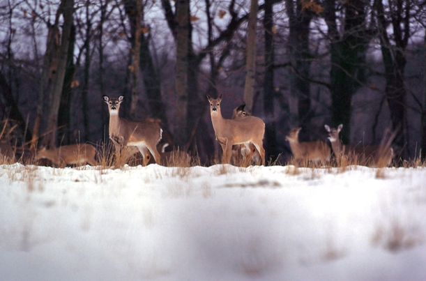 Photo: Courtesy Michigan DNR
