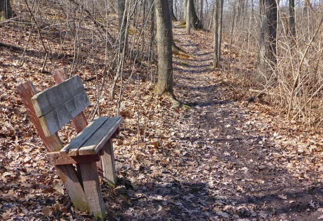 Stop and have a snack, or listen to the birds, along the Hodenpyl Woods trail. Photo by Howard Meyerson.