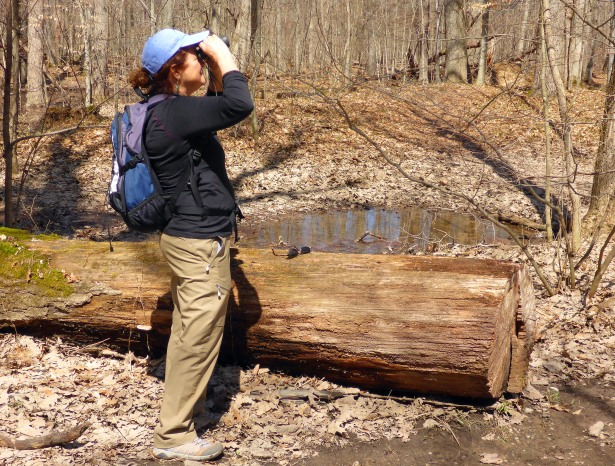 Looking for spring migrants, a bird-watcher stops to see a bird singing in the forest. Photo: Howard Meyerson