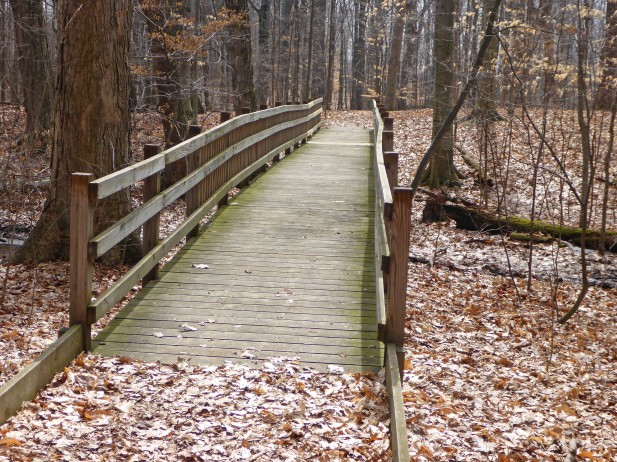 Take a peaceful stroll on the trails at Calvin College Ecosystem Preserve. Photo by Howard Meyerson
