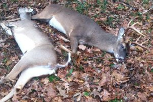 Michigan legislators want to raise fines to prevent poaching. Photo: Michigan Outdoor News.