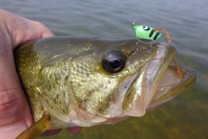 Small lakes often have good bass populations which can be caught with a surface popper and fly rod from a canoe. Photo: Howard Meyerson