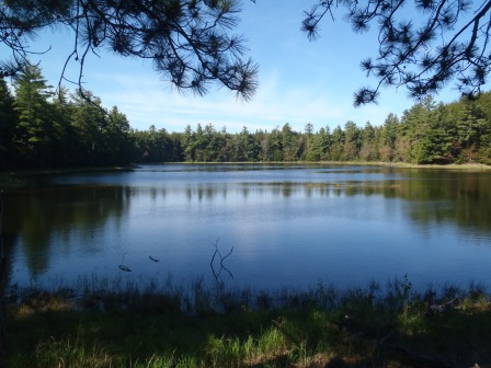 Forest Lake in western Upper Peninsula is one of the spots listed on the Michigan Department of Natural Resources' new Trout Trails website, which tracks popular sites for fishing trout. Photo: Courtesy of Michigan DNR.