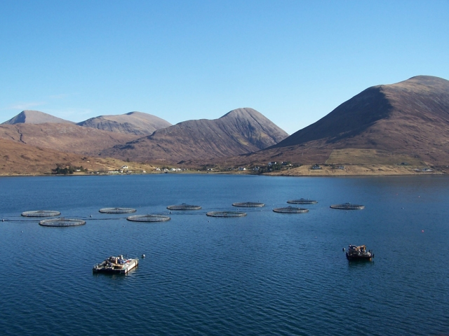 An example of offshore salmon farming in the sea (mariculture) at Loch Ainort, Isle of Skye. Photo: Wikipedia.