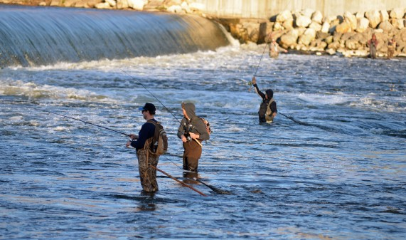 Anglers gather downstream of the Sixth St. Dam where salmon and steelhead congregate when they come upstream. Photo by Howard Meyerson.