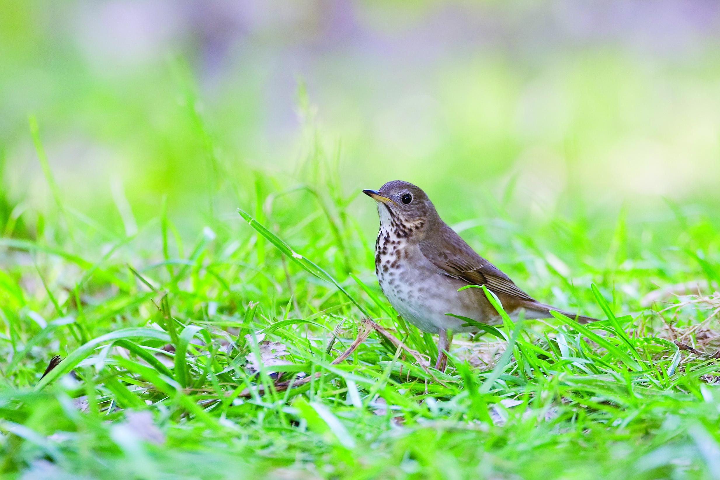 Plantas para Aves | Audubon Texas